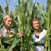 Dominique and Francis – the corn fields