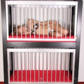 Arienh – her new cage